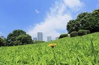 東京都 東雲のタワーマンションと公園