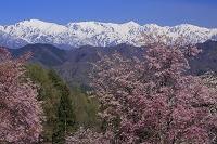 長野県 北アルプス早春