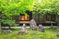 京都府 新緑の建仁寺