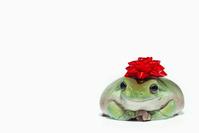蛙とリボン