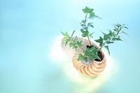 光の当った観葉植物と貝殻