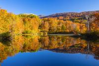 山形県 秋の地蔵沼