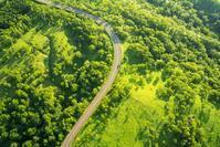 日本 北海道 一本の道