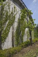 環状八号線 擁壁の強化及び緑化