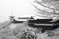 京都府 京都市 清水寺