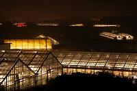 愛知県 電照菊のハウス夜景