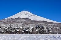 静岡県 裾野市 水ヶ塚から見た厳冬の富士山