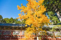 栃木県 日光東照宮 陽明門の回廊とカエデの黄葉