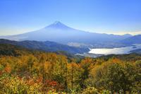 山梨県 西川新倉林道の カラマツ黄葉と河口湖と富士山
