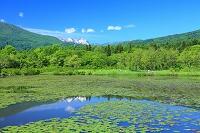 新潟県 妙高高原 初夏のいもり池