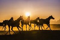 エジプト 馬のシルエット
