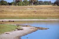 ボツワナ オカバンゴデルタ モレミ野生動物保護区 池 ワニ