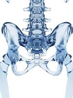 人体 骨格