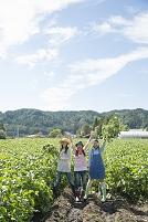畑で枝豆を収穫する日本人女性