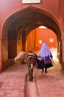 イラン ロバと女性