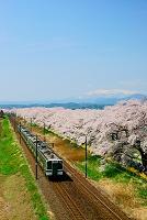 宮城県 白石川堤一目千本桜と列車