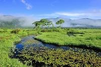 群馬県 尾瀬 中田代の池塘から望む白樺と山並み
