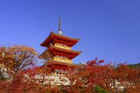 京都府 清水寺の三重塔と紅葉