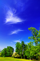北海道 公園の新緑の木々と青空