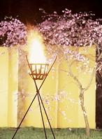 桜とかがり火