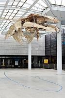 大阪府 大阪市立自然史博物館