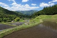 長野県 大桑村の棚田